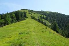 Gemeindealpe - von Brach Richtung Gipfel