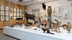 Naturkundemuseum Heimathaus Mariazell, Foto: Fred Lindmoser