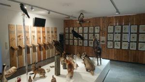 Naturmuseum im Heimathaus - Foto: Mariazell Online