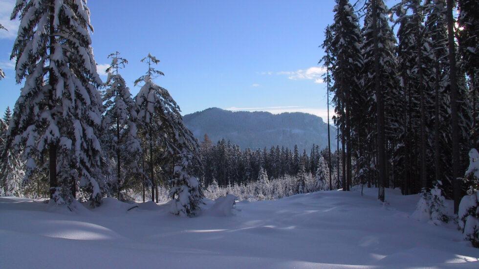 Schneebedeckter Wald, Foto: Mariazell Online