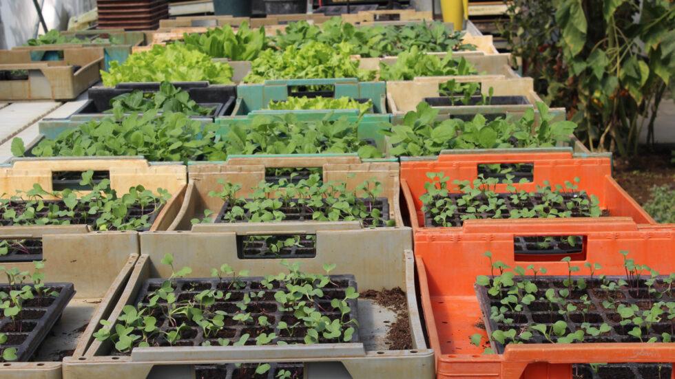 Biogarten & Gemüsevielfalt - Foto: Ulrike Schweiger