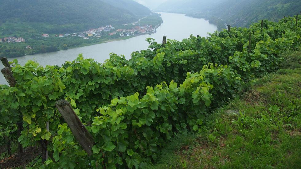 Weinreise - Foto: Ulrike Schweiger